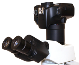 Canon EOS DSLR camera with SU-CA adapter on OLYMPUS CX21 microscope