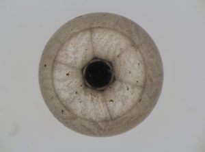 Bearing ball composed by Deep Focus
