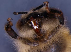 Head of the bee from the bottom composed by Deep Focus