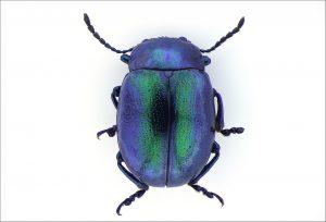 Beetle illuminated by SUNFLOWER illuminator
