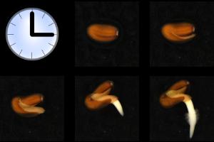QuickPHOTO time-lapse module