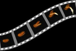 QuickPHOTO time-lapse video module