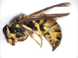 Wasp composed by Deep Focus